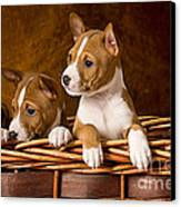 Basenji Puppies Canvas Print by Marvin Blaine
