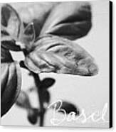 Basil Canvas Print by Linda Woods