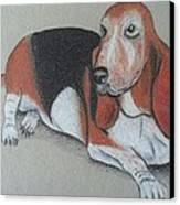 Bassett Puppy Canvas Print by Steve Jorde