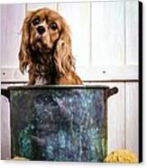 Bath Time - King Charles Spaniel Canvas Print by Edward Fielding