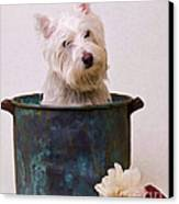 Bath Time Westie Canvas Print