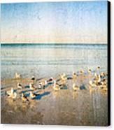 Beach Combers - Seagull Art By Sharon Cummings Canvas Print