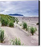 Beach Grass Canvas Print by Robert Bales