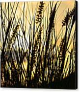 Beach Rise Canvas Print by Laura Fasulo