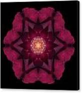 Beach Rose I Flower Mandala Canvas Print by David J Bookbinder