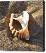 Beach Shell Canvas Print by David Yack