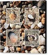 Beach Shells And Rocks Collage Canvas Print by Carol Groenen