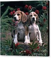 Beagles Canvas Print