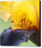 Bearded Iris Dwight Enys Abstract Canvas Print by Tim Gainey