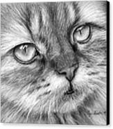 Beautiful Cat Canvas Print by Olga Shvartsur