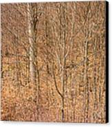 Beautiful Fine Structure Of Trees Brown And Orange Canvas Print