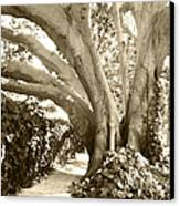 Beautiful Griffith Park Huge Trunk Tree Sepia Black White Vintage Earthy Fine Art Decorative Print Canvas Print by Marie Christine Belkadi