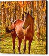 Beautiful Horse In The Autumn Aspen Colors Canvas Print by James BO  Insogna