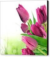 Beautiful Purple Tulips  Flower Canvas Print