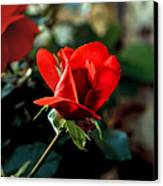 Beautiful Red Rose Bud Canvas Print by Robert Bales