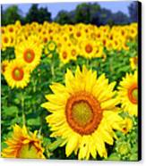 Beautiful Sunflowers Art Canvas Print by Boon Mee