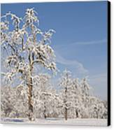 Beautiful Winter Day With Snow Covered Trees And Blue Sky Canvas Print