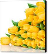 Beautiful Yellow Tulips Valentine Canvas Print by Boon Mee