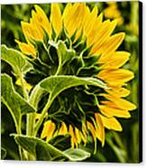 Beauty From The Back Canvas Print by Christi Kraft