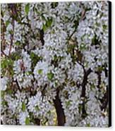 Beauty Of Spring Canvas Print by Yvette Pichette