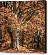 Bech Tree With Red Foliage Canvas Print