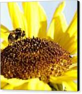 Bee And Flower Canvas Print by Les Cunliffe