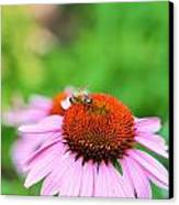 Bees Knees Canvas Print by Debbie Sikes