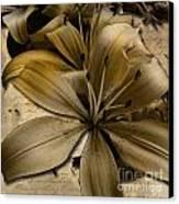 Bei Canvas Print by Yanni Theodorou