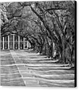 Beneath Live Oaks Bw Canvas Print by Steve Harrington