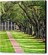Beneath Live Oaks Canvas Print