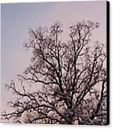 Bergen  Winter Tree Canvas Print by Hakon Soreide