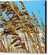 Beyond The Sea Oats Lies Eternity Canvas Print by Lorraine Heath