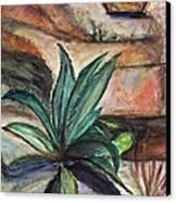Big Aloe Maguey Canvas Print by Anais DelaVega