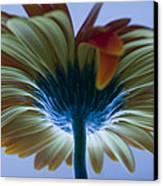 Big Flower Canvas Print by Victoria Herrera