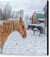 Big Horse  Little Horse Canvas Print by Skye Ryan-Evans