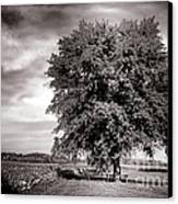 Big Old Tree Canvas Print by Olivier Le Queinec
