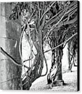 Biltmore Arbor Asheville Nc Canvas Print by William Dey
