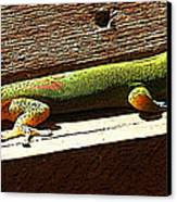 Binky The Gecko Canvas Print by Colleen Cannon