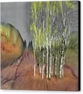 Birch Grove 1 Canvas Print by Carolyn Doe