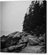 Birch Point Black And White Canvas Print
