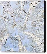 Birch Trees Canvas Print by Leo Gehrtz