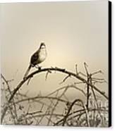 Bird In The Briar Canvas Print