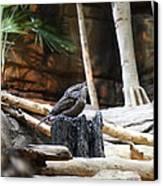 Bird - National Aquarium In Baltimore Md - 12129 Canvas Print