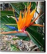 Bird Of Paradise Canvas Print by Bruce Kessler