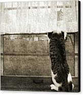 Bird Watching Kitty Cat Bw Canvas Print by Andee Design