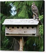 Birdhouse Takeover  Canvas Print