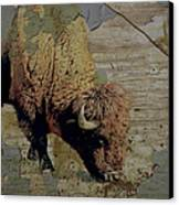 Bison Vintage Style -photo- Art Canvas Print by Ann Powell