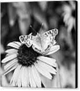 Black And White Butterfly Canvas Print by Debbie Sikes