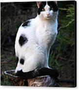 Black And White Cat On Tree Stump Canvas Print
