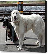 Black And White Dogs 5d25873 Canvas Print by Wingsdomain Art and Photography